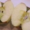 【有機・低農薬野菜】らでぃっしゅぼーやはリンゴと人参が美味い!